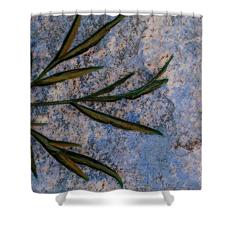 Leaf Shower Curtain featuring the photograph Altered State by Judy Wolinsky