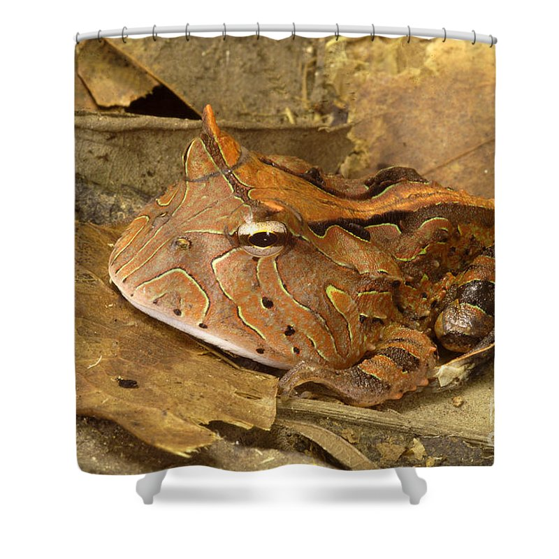 Amazon Horned Frog Shower Curtain for Sale by Natures Images