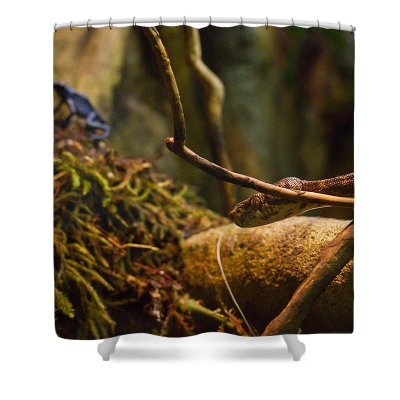 Boa Shower Curtain featuring the photograph Amazon Tree Boa by Eti Reid