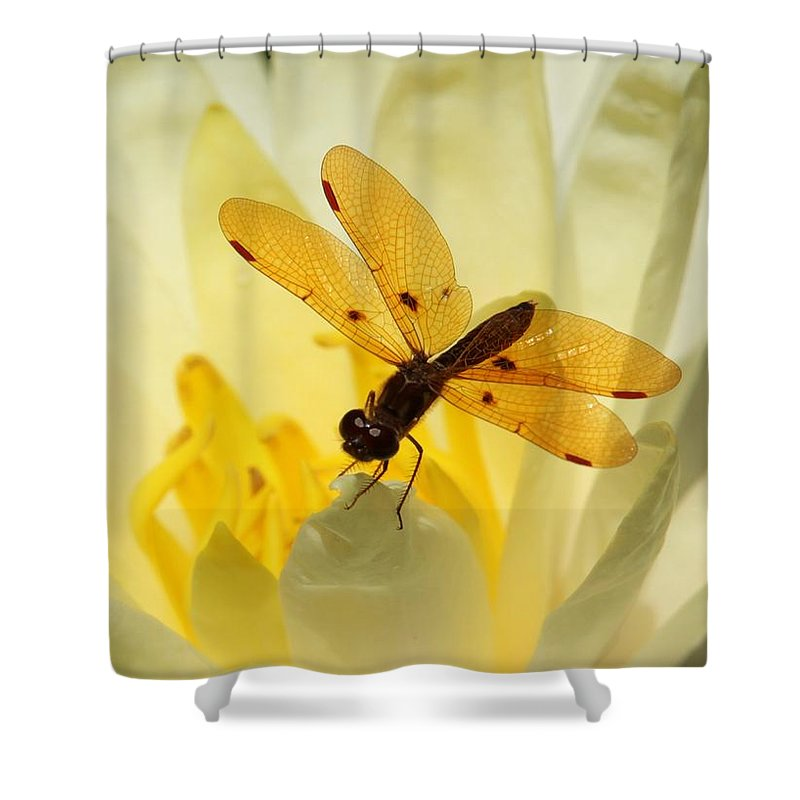 Dragon Fly Shower Curtain featuring the photograph Amber Dragonfly Dancer by Sabrina L Ryan