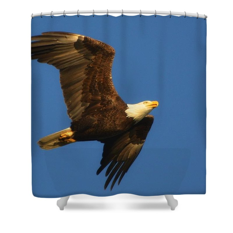 American Shower Curtain featuring the photograph American Bald Eagle Close-ups Over Santa Rosa Sound With Blue Skies by Jeff at JSJ Photography