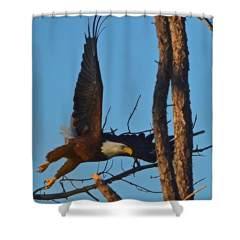American Bald Eagle Shower Curtain featuring the photograph American Bald Eagle I Mlo by Mark Olshefski