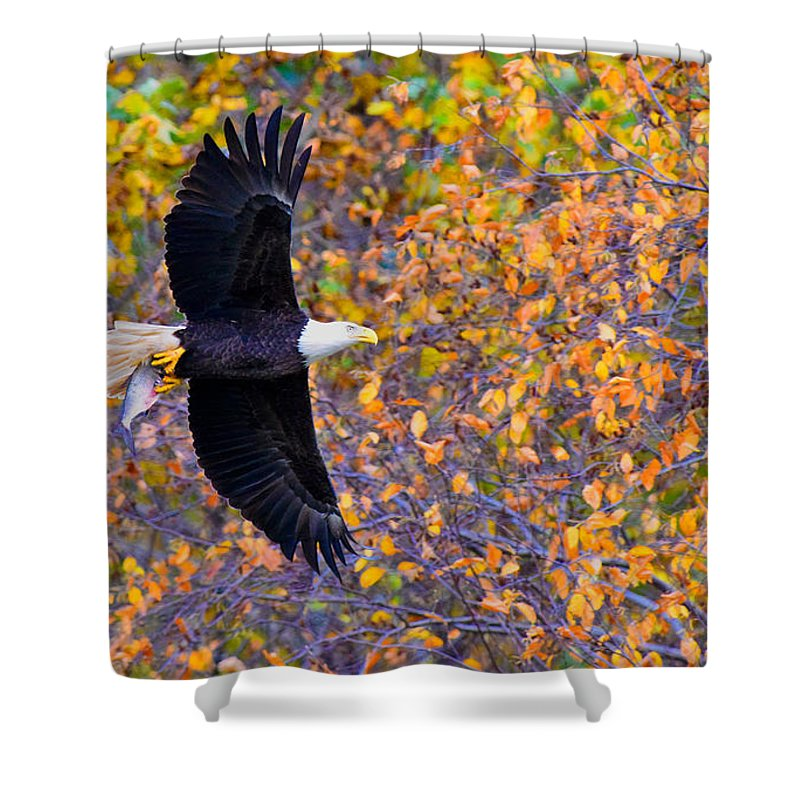 Eagle Shower Curtain featuring the photograph American Eagle In Autumn by William Jobes