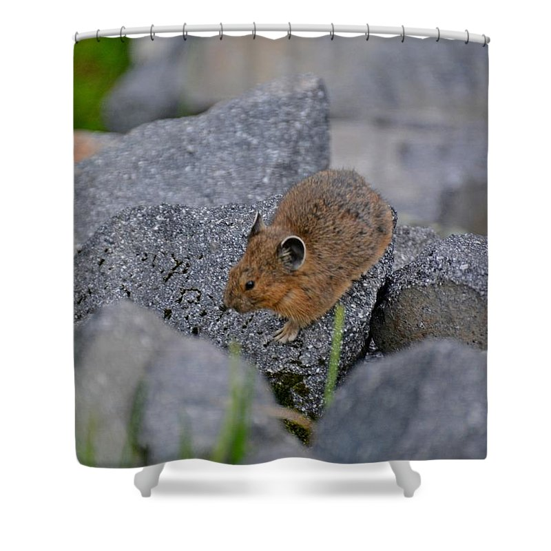 Pika Shower Curtain featuring the photograph American Pika by Lena Photo Art