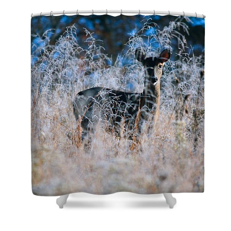 Deer Shower Curtain featuring the photograph Amid The Frosty Wheat by Nunweiler Photography
