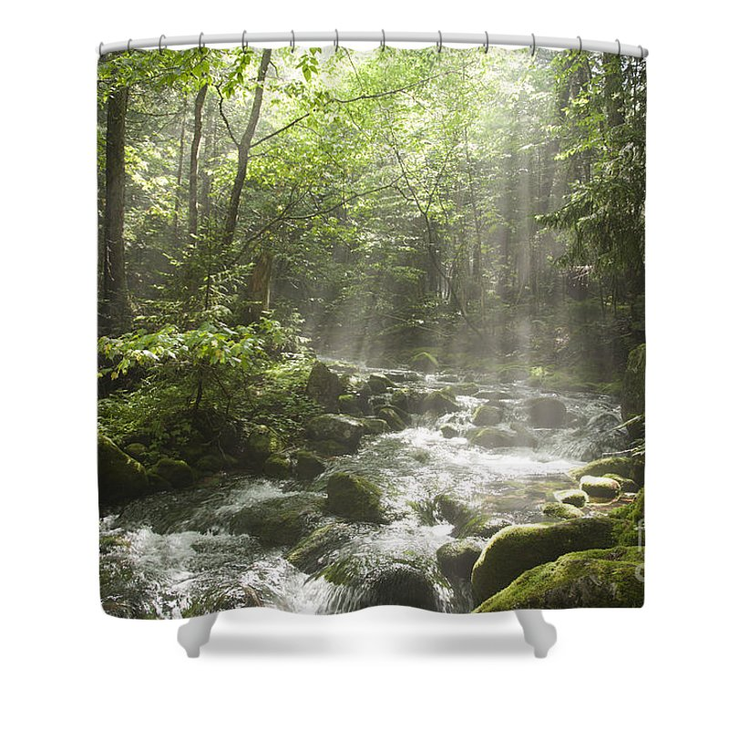 New England Shower Curtain featuring the photograph Ammonoosuc Ravine Trail - White Mountains Nh Usa by Erin Paul Donovan
