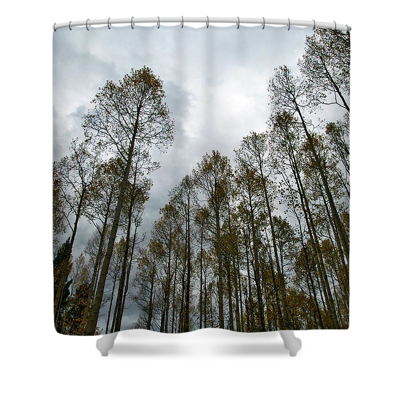 Landscape Photography Shower Curtain featuring the photograph Among Giants by Jeremy Rhoades