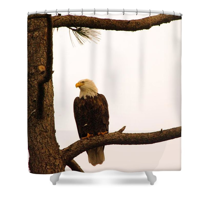 Eagles Shower Curtain featuring the photograph An Eagle Day Dreaming by Jeff Swan