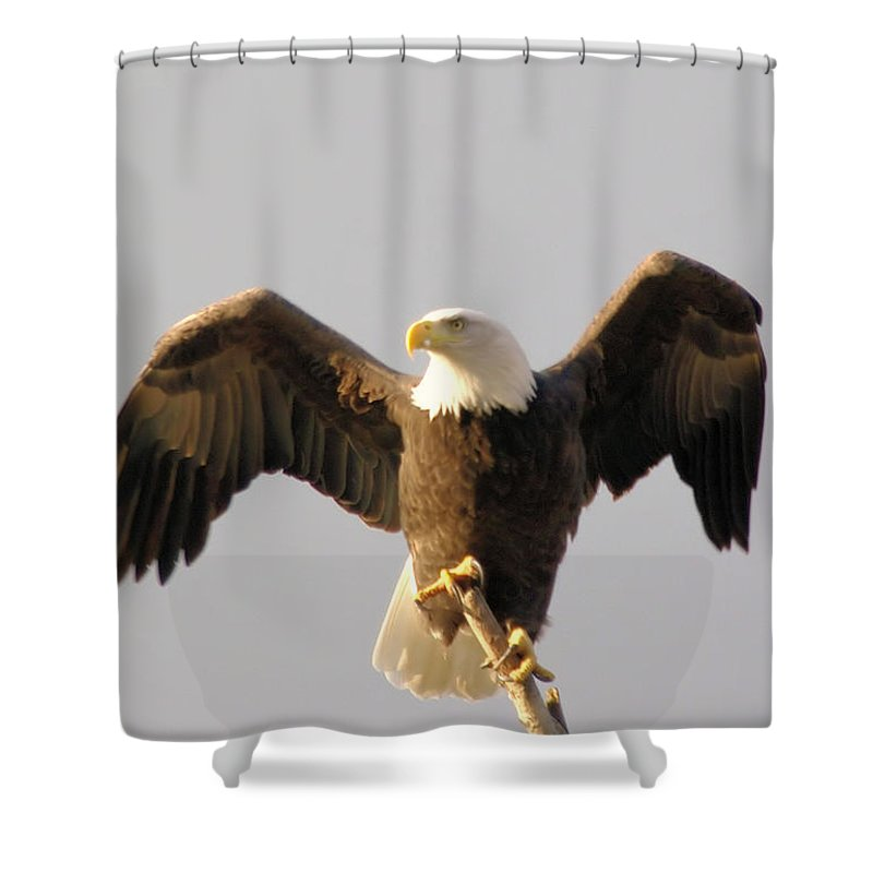 Birds Shower Curtain featuring the photograph An Eagle Posing by Jeff Swan