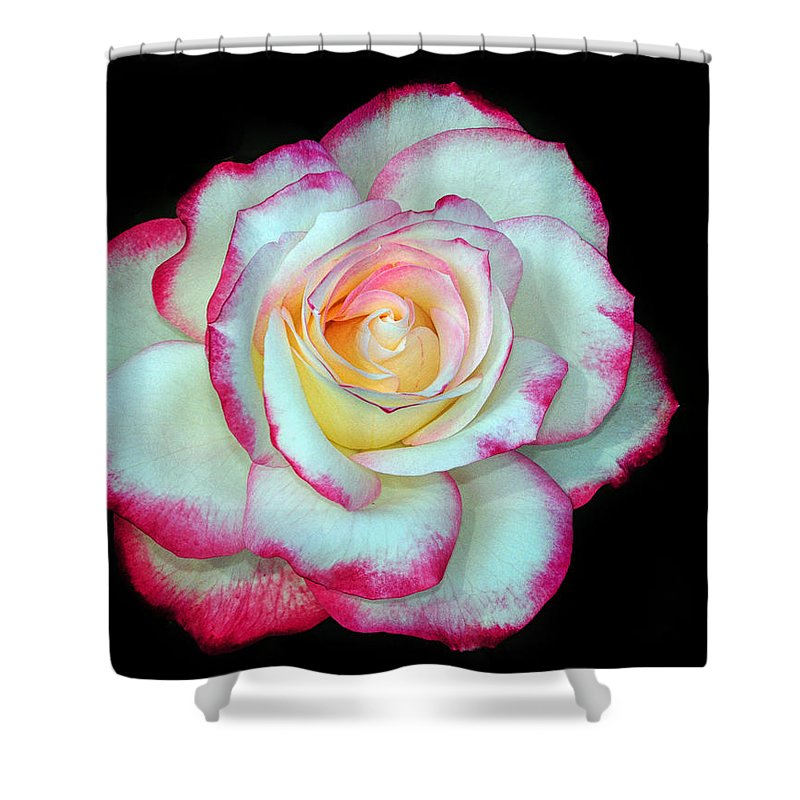 Rose Shower Curtain featuring the photograph An Eyecatcher by Dave Mills
