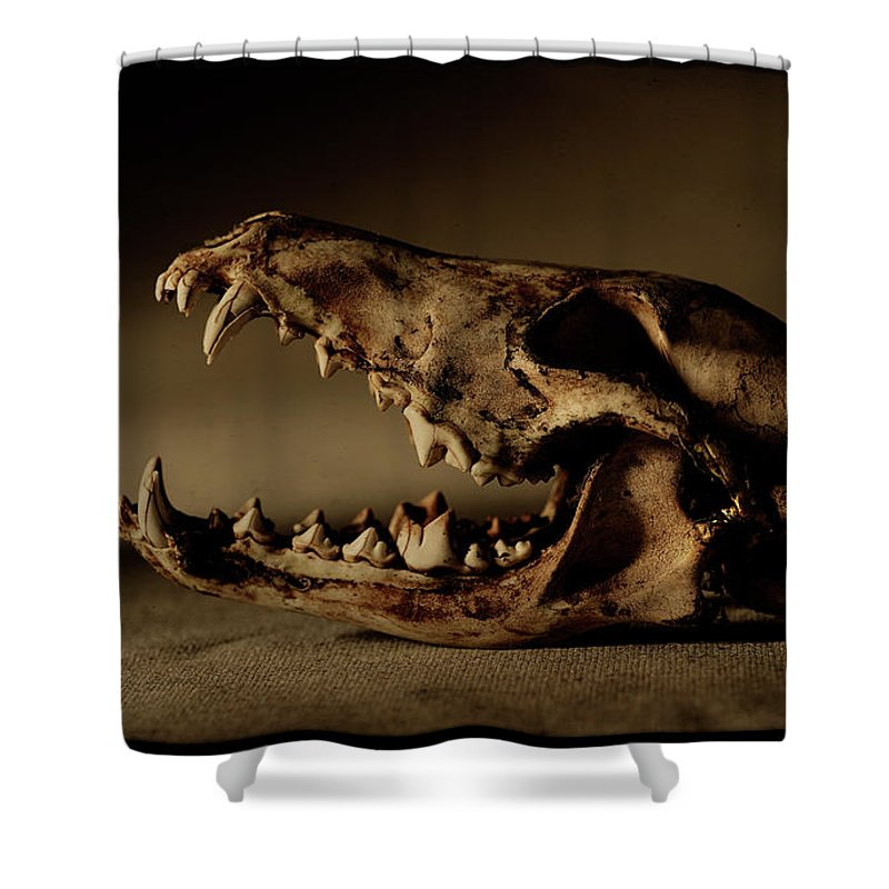 Animal Skull Shower Curtain featuring the photograph An Old Coyote Skull, Canis Latrans by Earl Harper