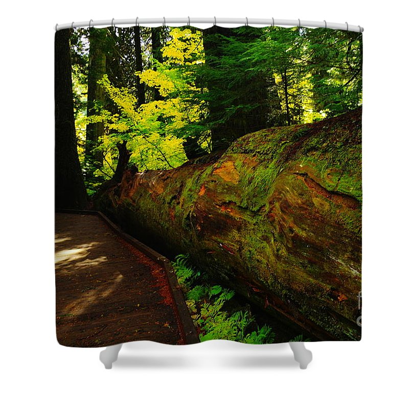 Trees Shower Curtain featuring the photograph An Old Fallen Tree by Jeff Swan