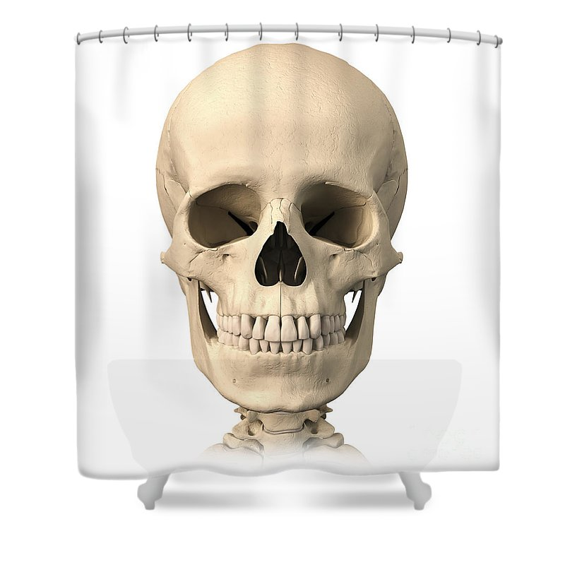Anatomy Of Human Skull, Front View Shower Curtain for Sale by ...