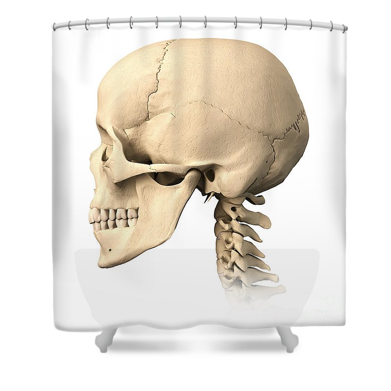 Anatomy Shower Curtain Featuring The Photograph Of Human Skull Side View By Leonello Calvetti