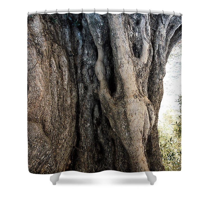 Colette Shower Curtain featuring the photograph Ancient Old Fine Olive Tree 6 Mountain Spain by Colette V Hera Guggenheim
