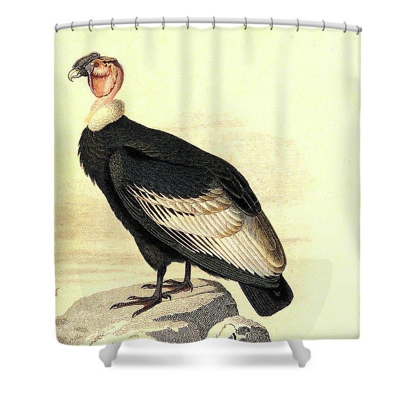 Condor Shower Curtains