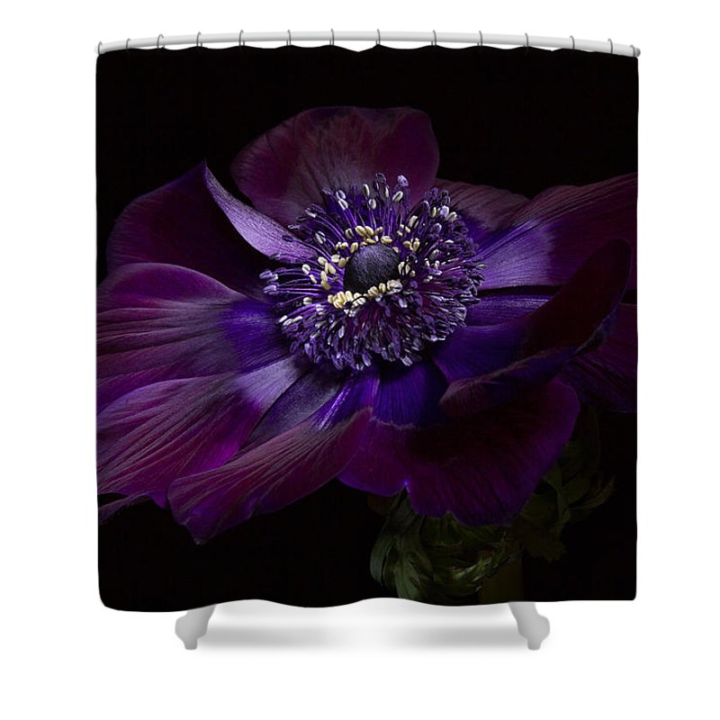 Anemone Coronaria De Caen Shower Curtain featuring the photograph Anemone Coronaria De Caen by Ann Garrett