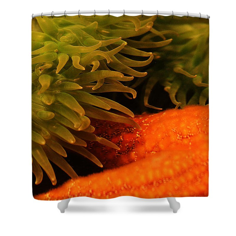 Anenome Shower Curtain featuring the photograph Anenome And Starfish by Robert Woodward