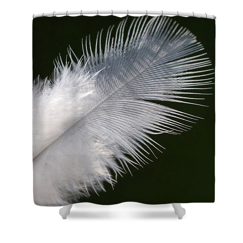 Angel Shower Curtain featuring the photograph Angel Feather by Carol Lynch