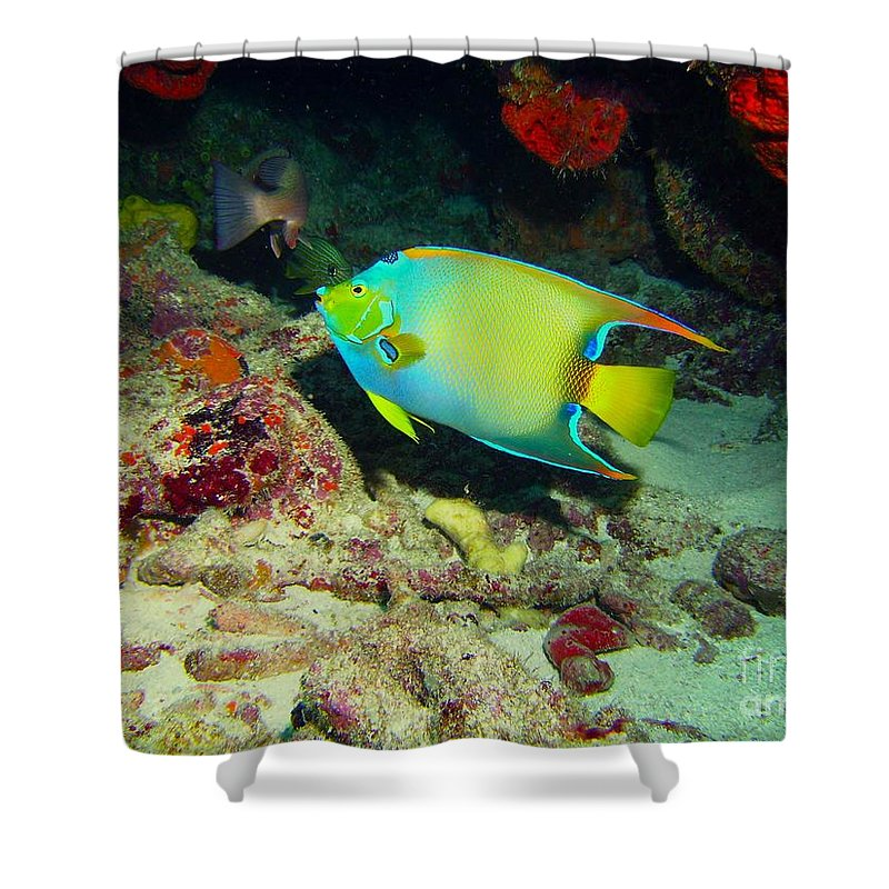 Angel Fish Shower Curtain featuring the photograph Angel Fish by Carey Chen