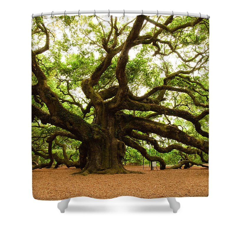 Tree Shower Curtain featuring the photograph Angel Oak Tree 2009 by Louis Dallara