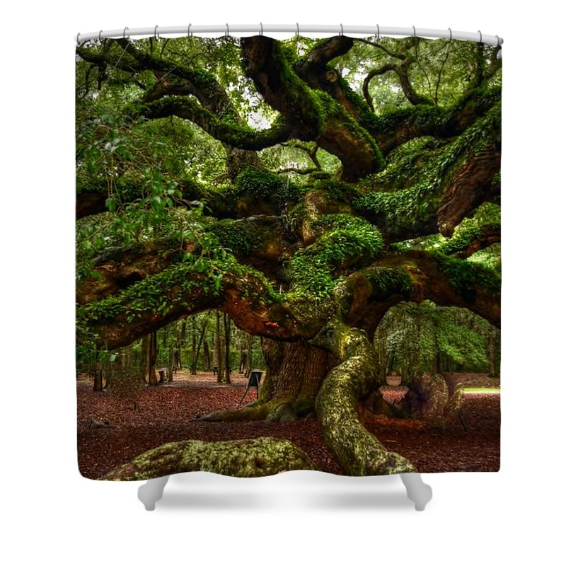 Angel Shower Curtain featuring the photograph Angel Oak Tree by Kathleen Struckle