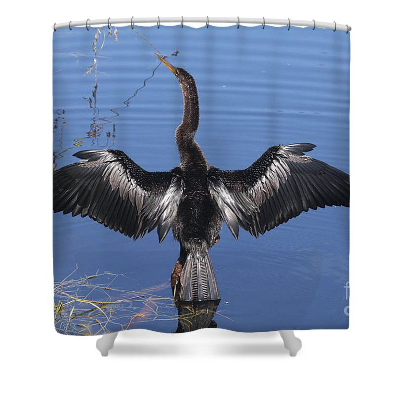 Anhinga Shower Curtain featuring the photograph Anhinga Sunbathing by Christiane Schulze Art And Photography