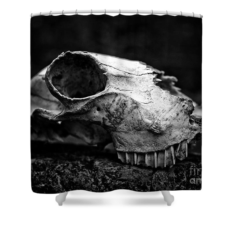 Animal Skull Shower Curtain featuring the photograph Animal Skull by Brothers Beerens
