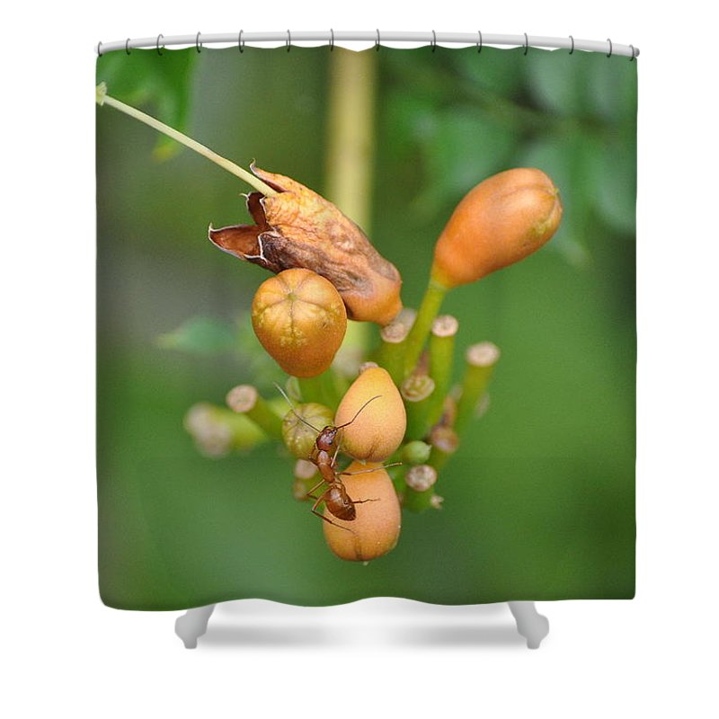Ant Shower Curtain featuring the photograph Ant On Plant by Stacy Abbott
