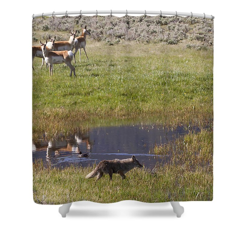 Antelope Shower Curtain featuring the photograph Antelope  Duck  And Coyote by J L Woody Wooden