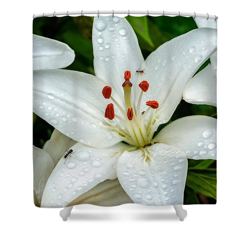 Flower Shower Curtain featuring the photograph Antsy by Steve Harrington