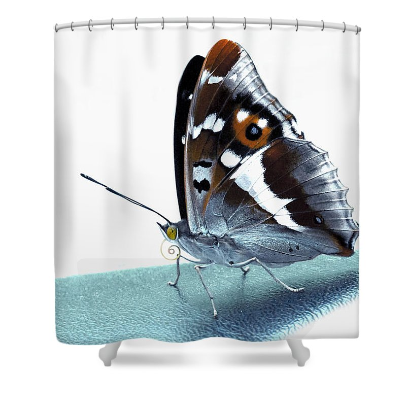 Apatura Iris Shower Curtain featuring the photograph Apatura Iris On The Runway by Yevgeni Kacnelson