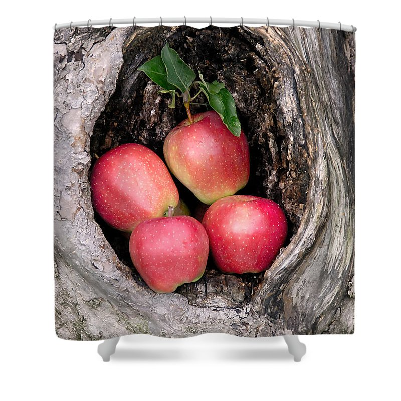 Apple Shower Curtain featuring the photograph Apples In Tree by Anthony Sacco