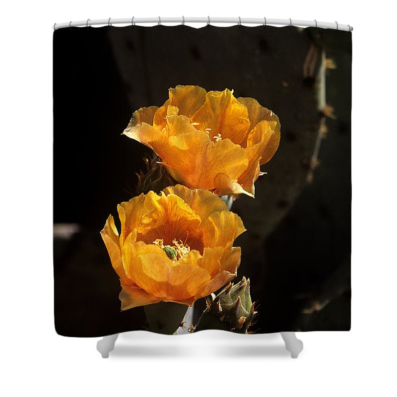 Cactus Shower Curtain featuring the photograph Apricot Blossoms by Kathy McClure