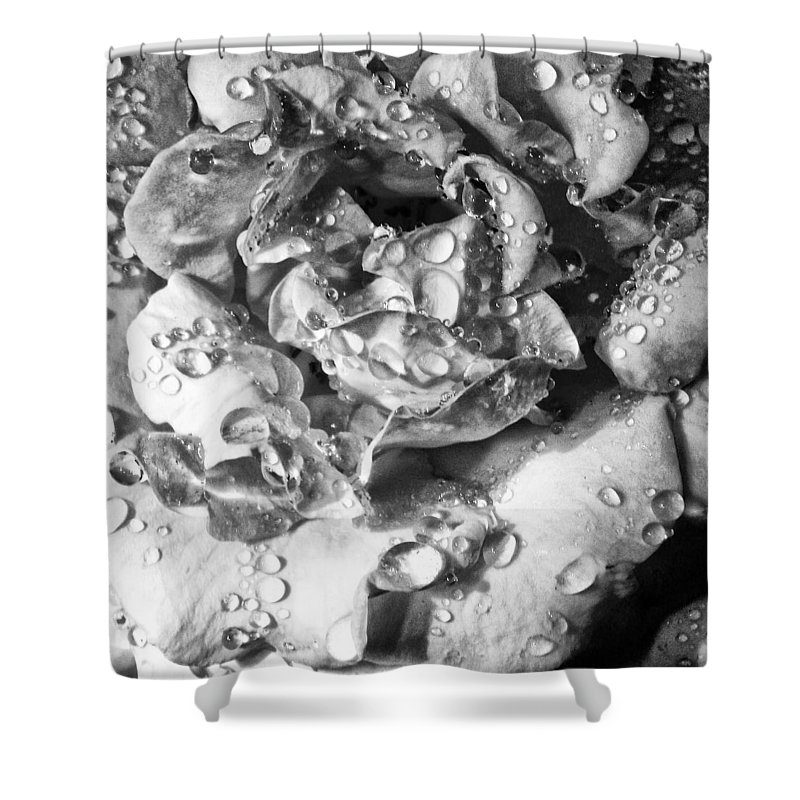 William Dey Shower Curtain featuring the photograph April Rose Bw Palm Springs by William Dey