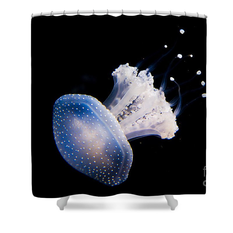 Zoo Shower Curtain featuring the photograph Aquarium Berlin by Sv