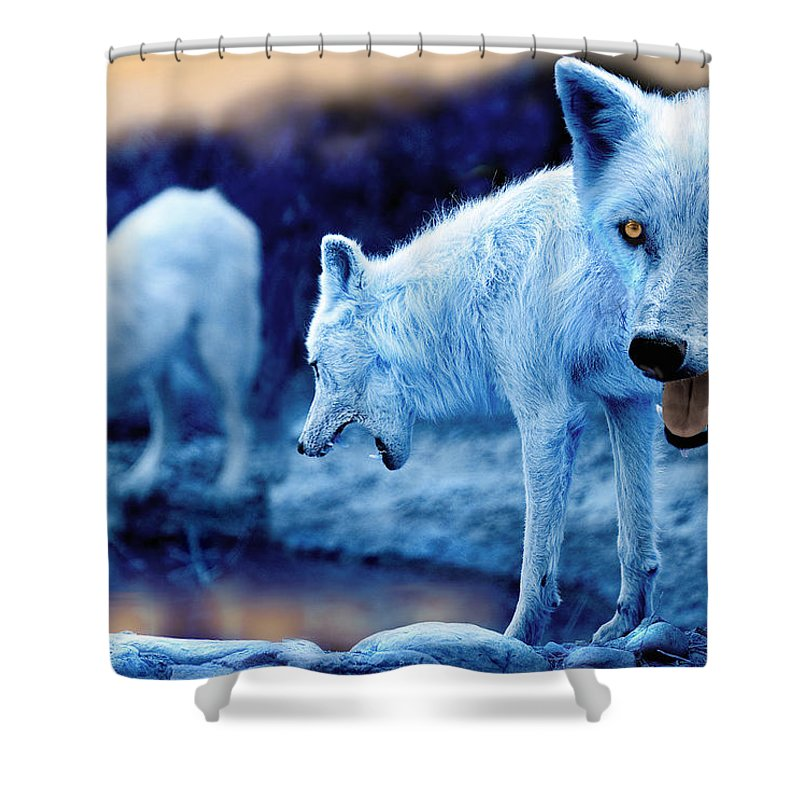 Wolf Shower Curtain featuring the photograph Arctic White Wolves by Mal Bray