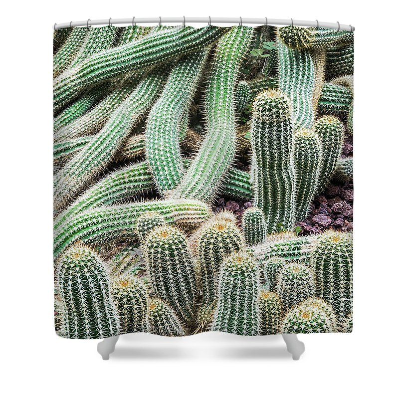 Heap Shower Curtain featuring the photograph Argentine Giant Cactus by Andy Sotiriou