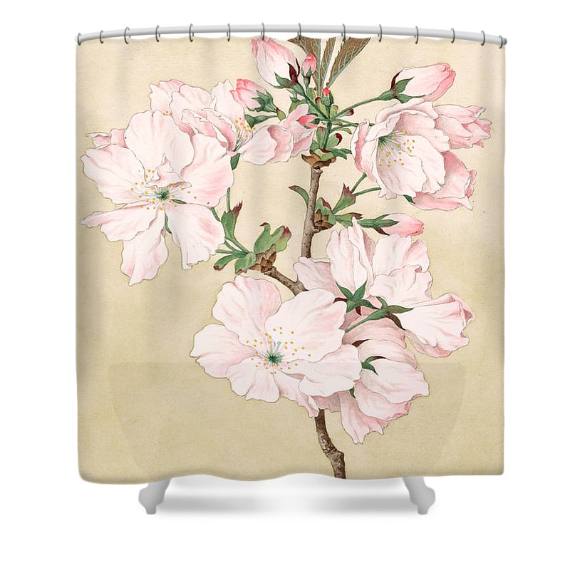 Japan Shower Curtain Featuring The Painting Ariake