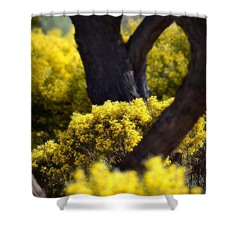 Spring Shower Curtain featuring the photograph Arizona Spring by Deb Halloran