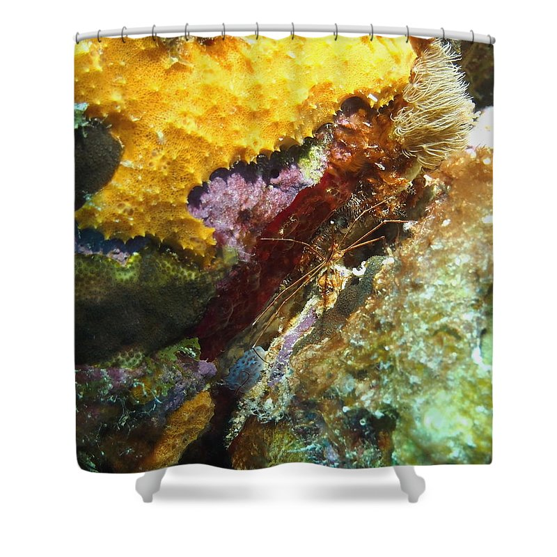 Nature Shower Curtain featuring the photograph Arrow Crab In A Rainbow Of Coral by Amy McDaniel