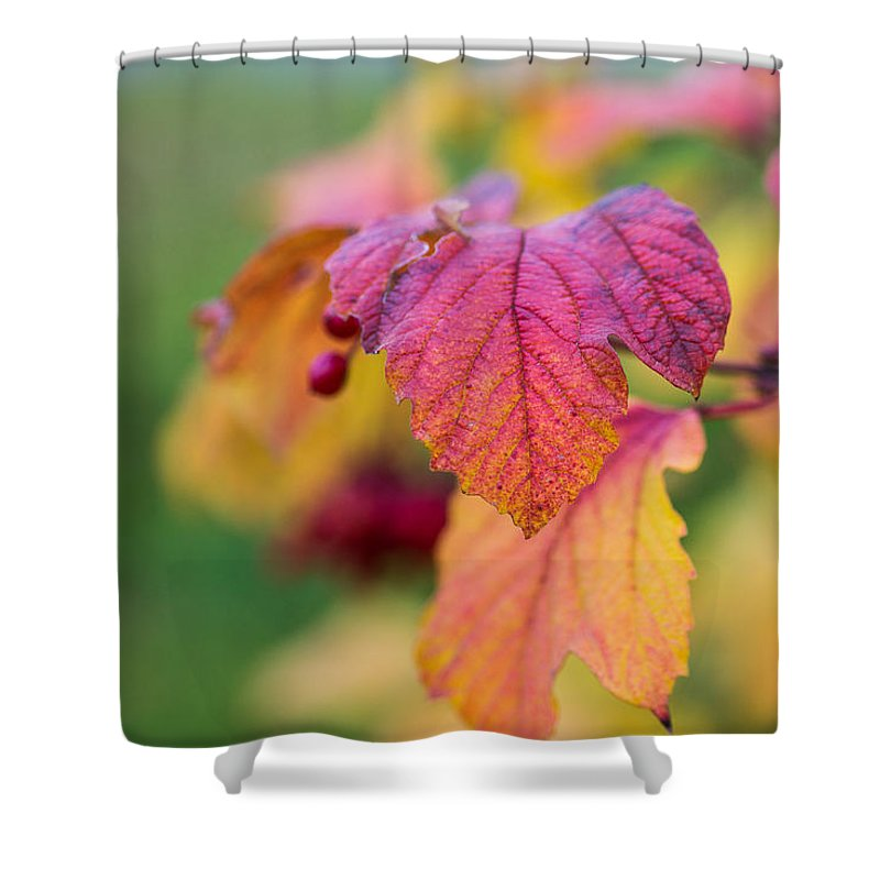 Agriculture Shower Curtain featuring the photograph Arrowwood Leaf - Featured 3 by Alexander Senin
