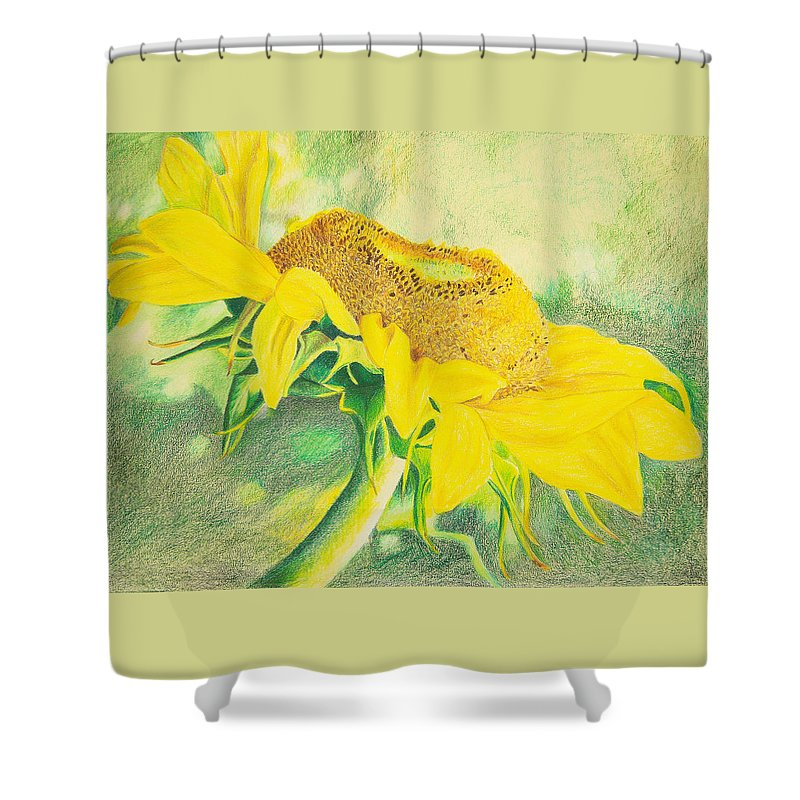 Sunflower Art Print Shower Curtain featuring the mixed media Sunflower Print Art For Sale Colored Pencil Floral by Diane Jorstad