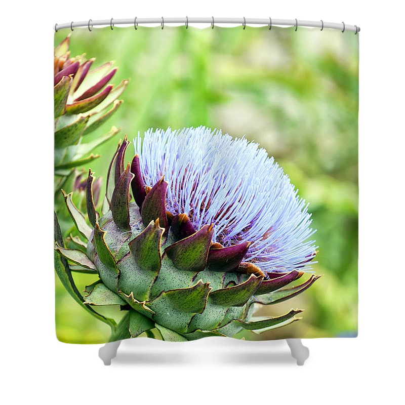 Artichoke Shower Curtain featuring the photograph Artichoke Flower by Antony McAulay