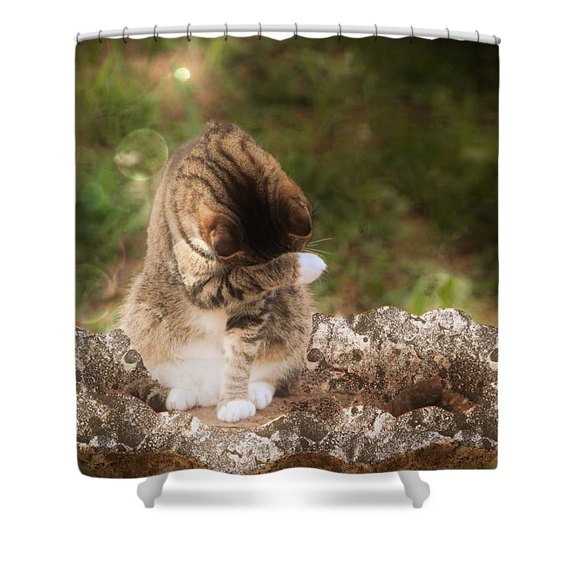 Cat Shower Curtain featuring the photograph Ashamed by Ericamaxine Price