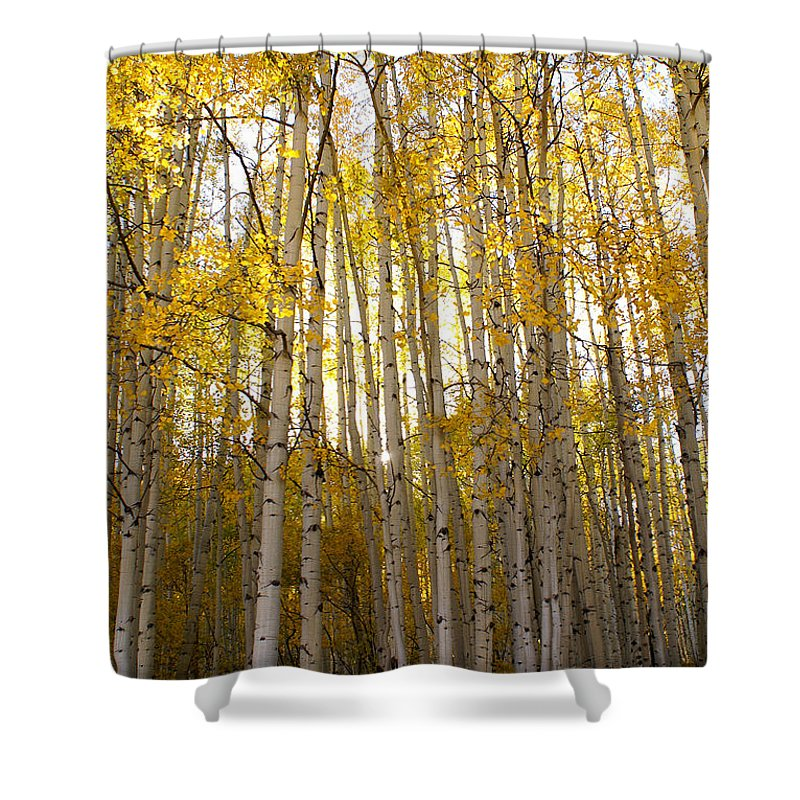 Aspen Shower Curtain featuring the photograph Aspen Autumn by Kelly Black