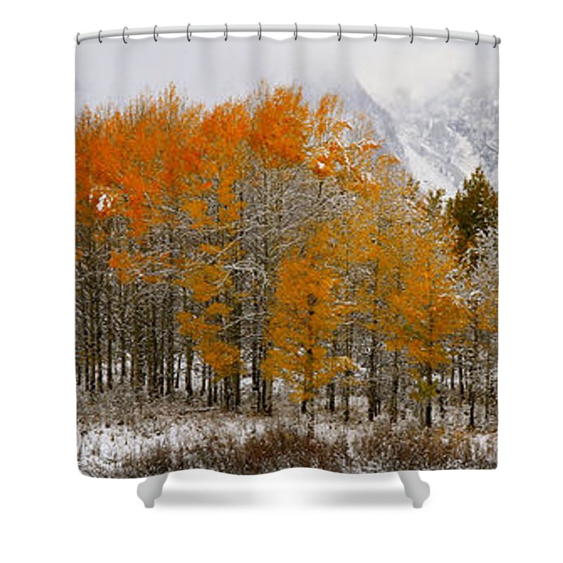 Trees Shower Curtain featuring the photograph Aspen Grove Along The Snake River Grand Teton National Park by Ed Riche