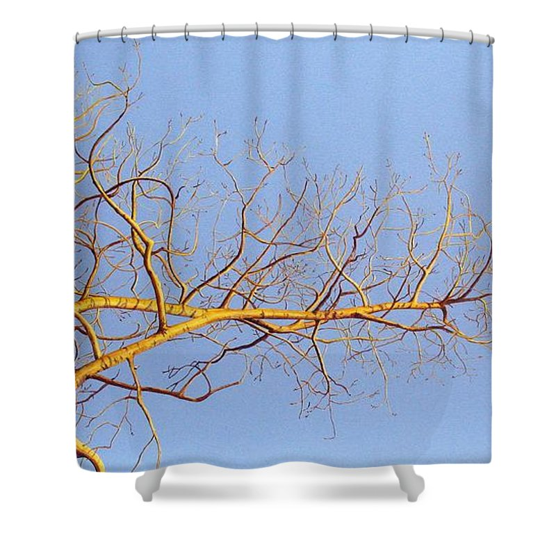 Aspen Painting Shower Curtain featuring the painting Aspen In The Autumn Sun by Elaine Booth-Kallweit