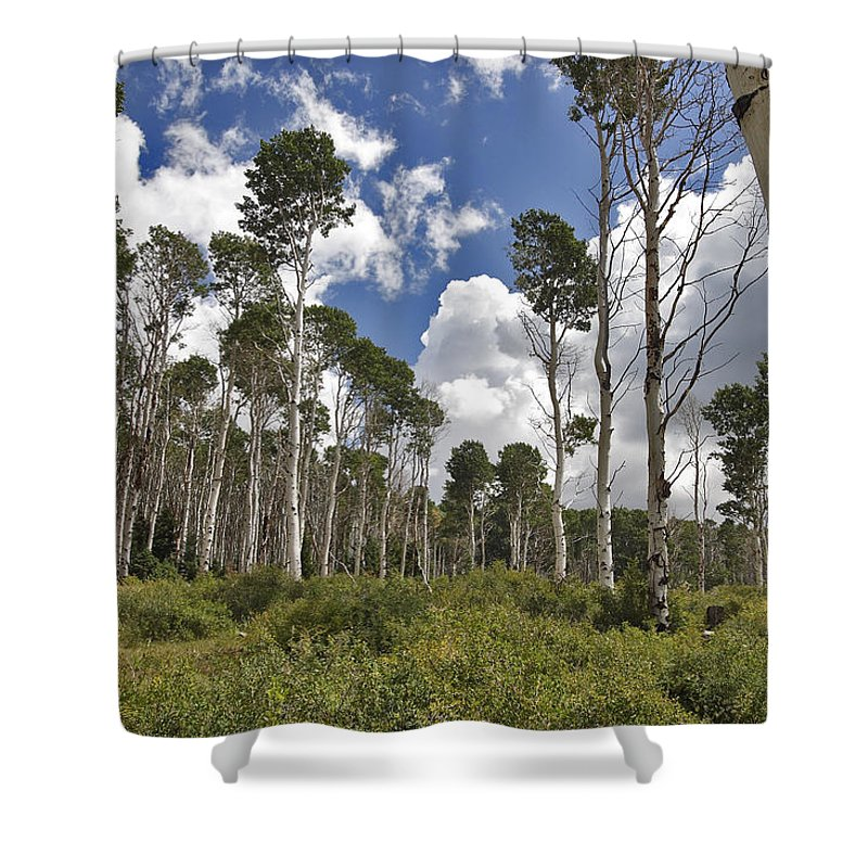3scape Shower Curtain featuring the photograph Aspen Grove by Adam Romanowicz