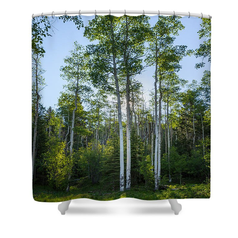 Aspen Shower Curtain featuring the photograph Aspens At Sunrise 1 - Santa Fe New Mexico by Brian Harig